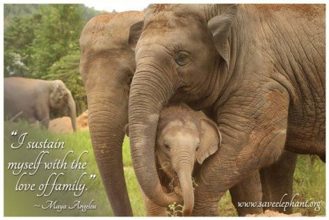 Photo from saveelephant.org